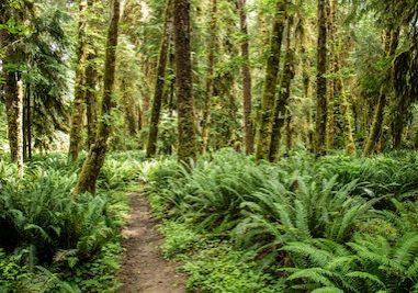 trail ferns woods