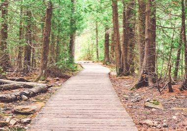 walking path woods